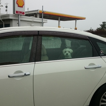 毎年必ずスパイクも一緒に車で家族旅行に行っていました!