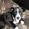 台風で被災した地域からのミックス犬 二カ月