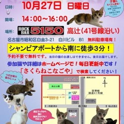 ☆子猫祭り開催します。☆彡サクラねこ名古屋