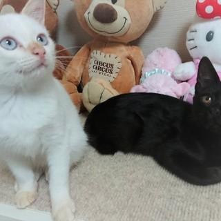 白黒♡♥モノトーン子猫2頭一緒に