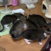 8匹にゃんこず(実家猫)