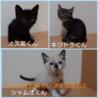 工場うまれの可愛い猫☆動画あります♪