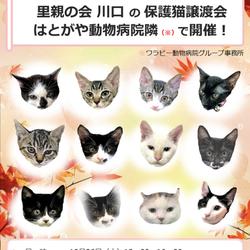 病院内での保護猫譲渡会