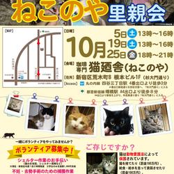 10月25日(金) 四谷猫廼舎 里親会(ボランティア募集中) サムネイル1