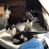 子猫ちゃん達のご家族を探しています!