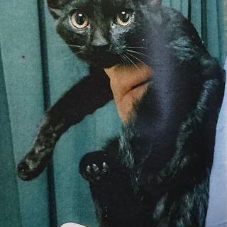 生後7ヶ月黒猫オス