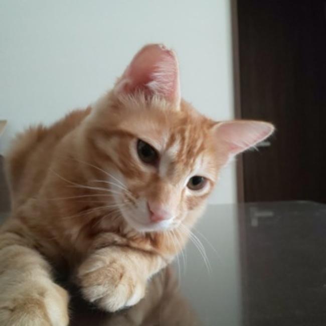beckoning catのカバー写真
