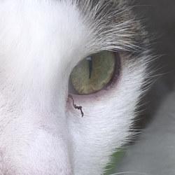 今朝の窓ぎわ猫