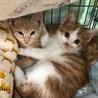 JSPCA猫の譲渡会&小さな命の写真展
