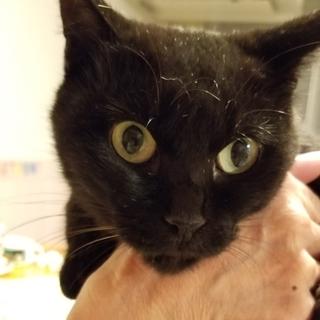【動画あり♡】人慣ればっちり!!黒猫のミクちゃん