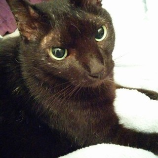おっとりした黒い猫!