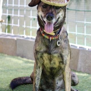 まるで帽子モデル!スタイル抜群な琉球犬ミックス