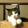 人も猫も大好き!きれいなサバ白オス サムネイル2