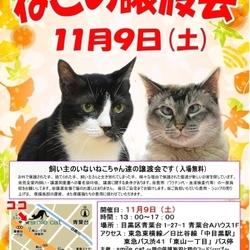 ★11月9日(土)「ねこの譲渡会」smile cat@中目黒(室内) サムネイル1
