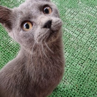 人好き甘えっ子の子猫さん♀*エイズ(+)