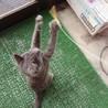 人好き甘えっ子の子猫さん♀*エイズ(+) サムネイル5