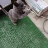 人好き甘えっ子の子猫さん♀*エイズ(+) サムネイル6