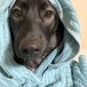急に寒くなったので赤頭巾ならぬ青頭巾の狼状態