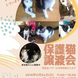 第5回 保護猫譲渡会In山口県