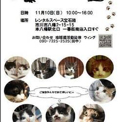 11/10(日)本八幡譲渡会開催