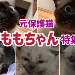 【元保護猫すもも】里親さんから頂いた動画写真の一部