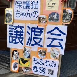 もふもふ西宮 保護ネコの幸せ譲渡会 サムネイル3