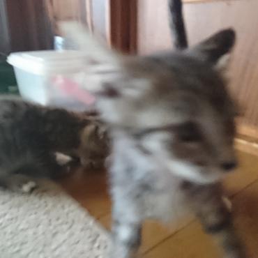 子猫2匹の大運動会...2匹だと騒がしさが2倍じゃなく4倍かも