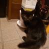 生後2~3ヶ月、ゴロゴロ黒猫