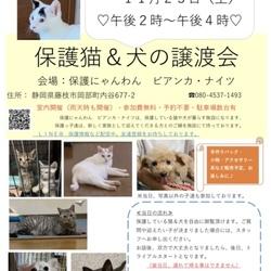 保護猫&犬の譲渡会(手作り商品販売) サムネイル1