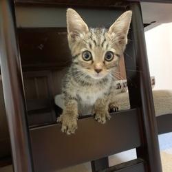 保護猫&犬の譲渡会(手作り商品販売) サムネイル2