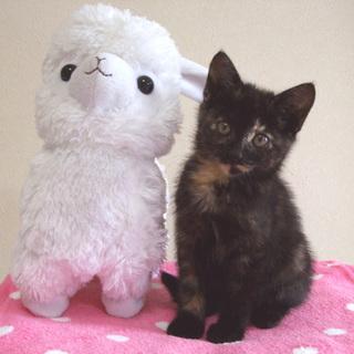 とても美子にゃんのさび猫ちゃんです=^_^=