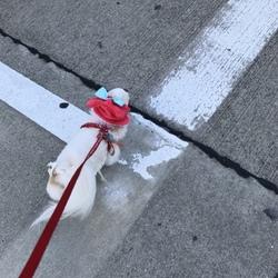 赤いリボンの日 犬の日