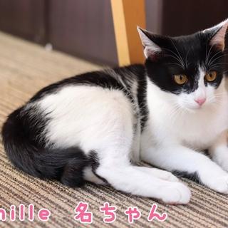 白黒子猫 名ちゃん 里親募集中♡
