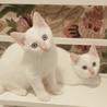 【11/3お台場】超美猫5兄妹