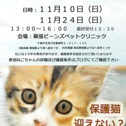 千葉市「 幕張 ねこの譲渡会」動物病院で開催です
