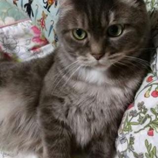 ふわふわ美猫