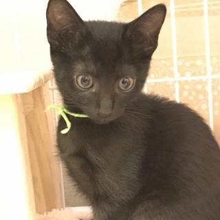 可愛い黒猫チョコくん