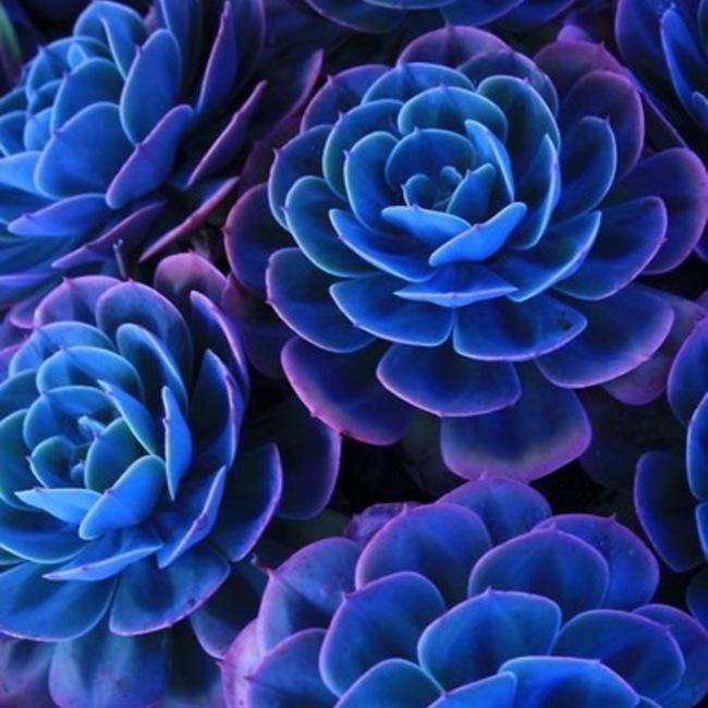 ブルー&ブルーのカバー写真