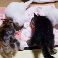 【11/4】今日の仔猫達(ΦωΦ){お腹いっぱい〜
