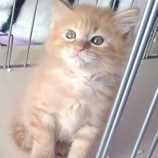 子猫の里親さん募集中