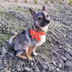 リボン/盲導犬