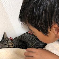 保護猫トライアルナウ!