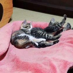 【11/6】今日の仔猫たち(ΦωΦ)(ΦωΦ)〜♪