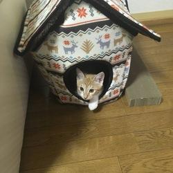 初めての〜保護猫の里親になりました〜