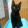 募集停止、人なっこい黒猫くん