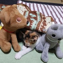 【11/7】今日の仔猫たち(ΦωΦ)〜♪