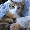 パステル三毛の子猫です(11/10の譲渡会に参加 サムネイル5