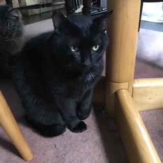 黒猫のオス。猫に慕われる猫!