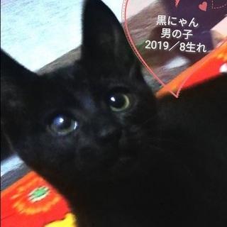 黒猫アーノルド