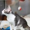 譲渡対象猫のご紹介